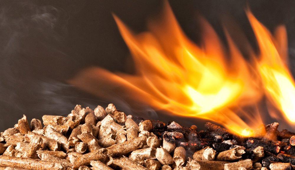 ¿Qué es la biomasa y cuál es su función?